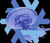 18.09 Jellyfish logo